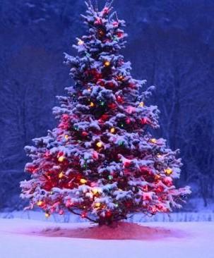 foto albero per cs